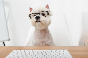 """5 Ways Dog-Friendly Work Policies Turn a """"Ruff' Workday into a Great One"""