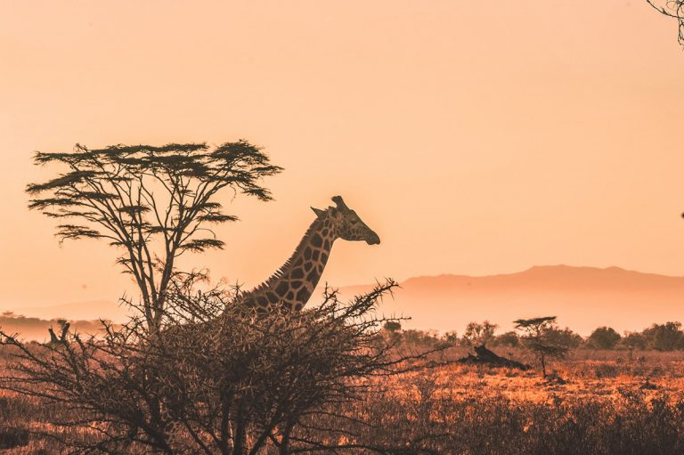 Kenya: The Ultimate Safari Adventure